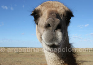 Faune de Patagonie