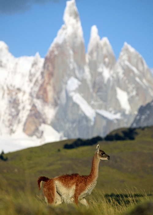 Parcs nationaux, l'Argentine un pays pionnier