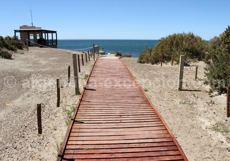 Punta Norte, Patagonie Nord