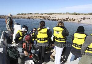 Observation d'otaries de Patagonie