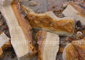 Troncs d'arbres fossilisés Bahia Bustamante