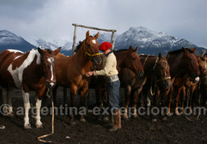 Gaucho et chevaux, estancia Nibepo Aike
