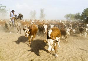 Gaucho en charge du troupeau, Estancia Buena Vista
