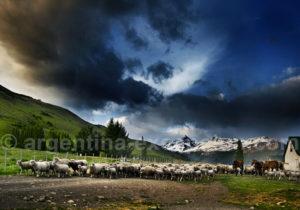 Nibepo Aike, estancia de moutons