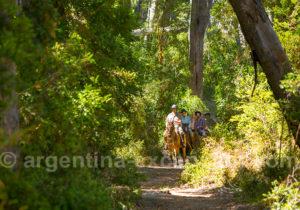Balade en forêt sur l'île Victoria