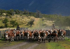 Elevage d'ovins à Nibepo Aike