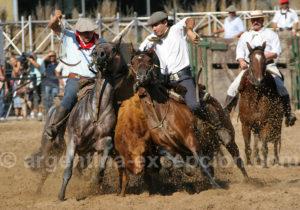 Démonstrations équestres, La Rural