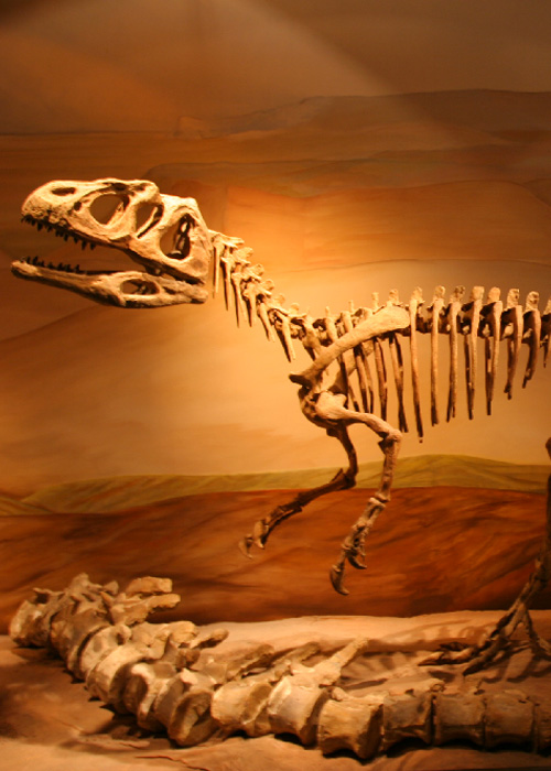 La vallée des dinosaures Neuquen