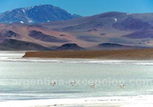 Laguna Brava, région Cuyo