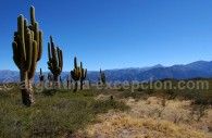 Parc National Los Cardones