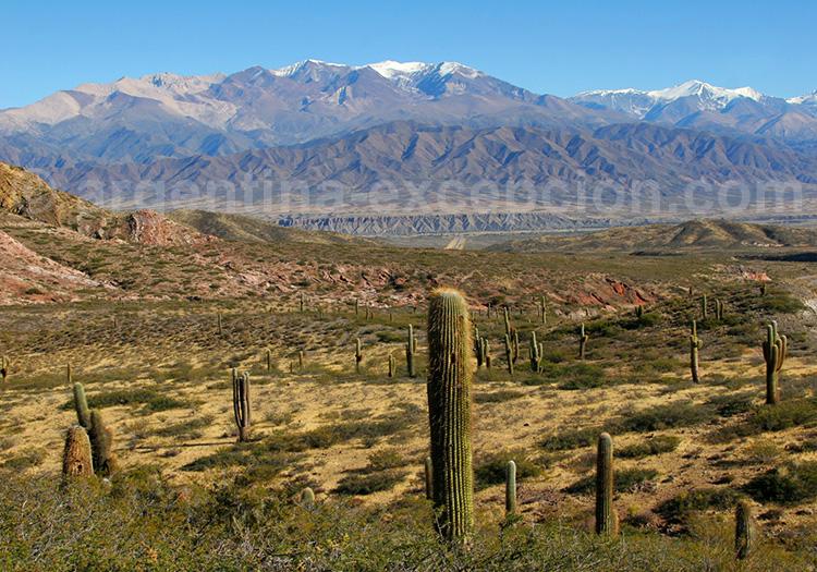 Géographie du parc national Los Cardones