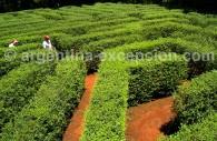 Labyrinthe Végétal Montecarlo