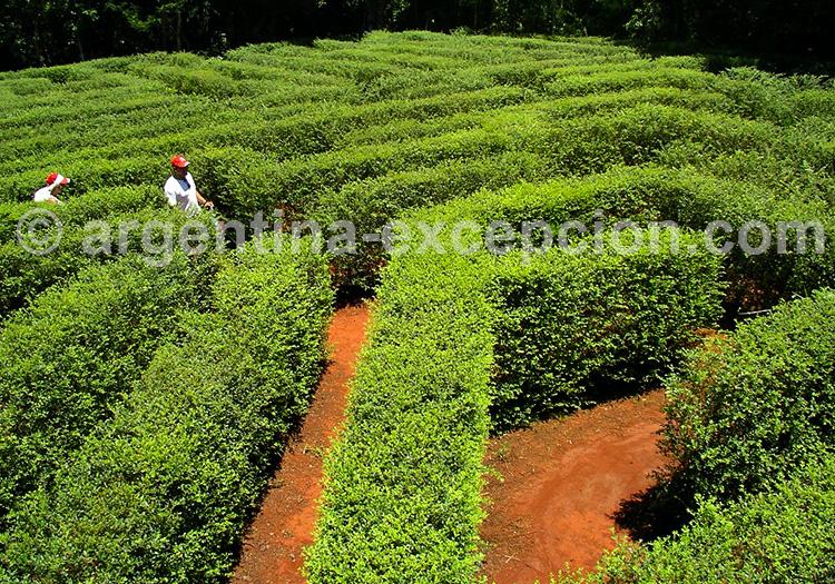 Labyrinthe Végétal Montecarlo, Misiones