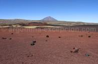 Parc La Payunia Volcan Payun Matru