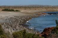 Réserve naturelle Punta Tombo