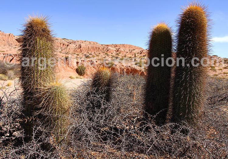 Cactus du parc los Cardones