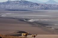 laguna blanca catamarca argentine