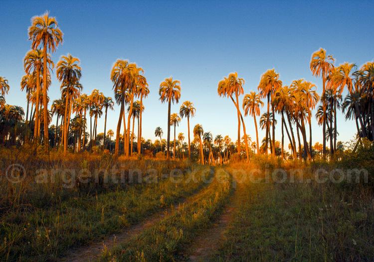 Parc national El Palmar, Entre Rios