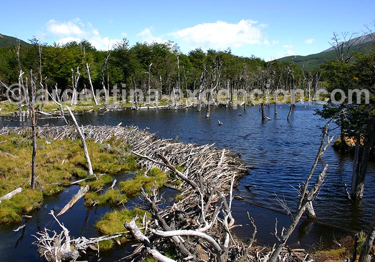 Parc Terre de Feu, Ushuaia - Crédit Jacques Vaysse