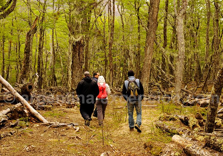 Promenade en forêt en Terre de Feu
