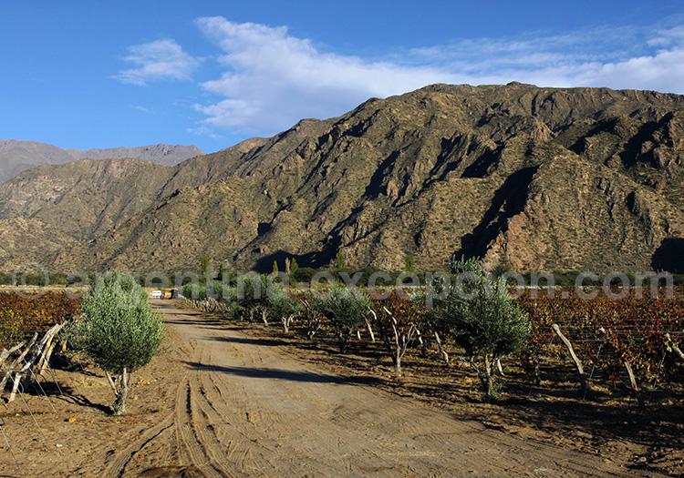 Vignoble de Cafayate, Salta