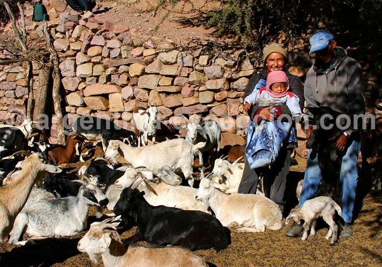 Éleveurs de chèvres, Iruya