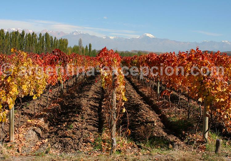 Tupungato, Valle de Uco, Mendoza