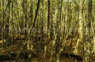 vegetation Terre de Feu