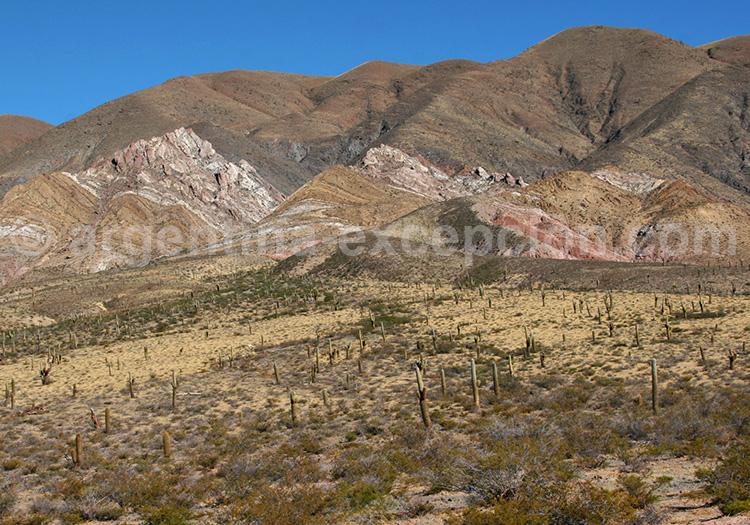 Paysages du parc national Los Cardones
