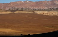 volcan galan catarmaca argentine