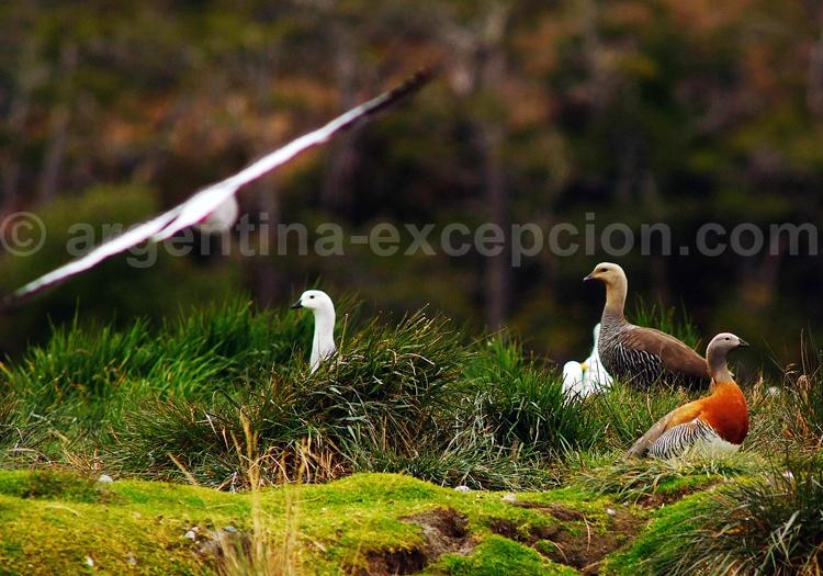 La faune d'Ushuaia