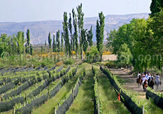 Algodon Wine Estates