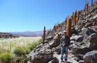 Vallées Calchaquies, Parc Los Cardones