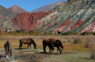 chevaux humahuaca