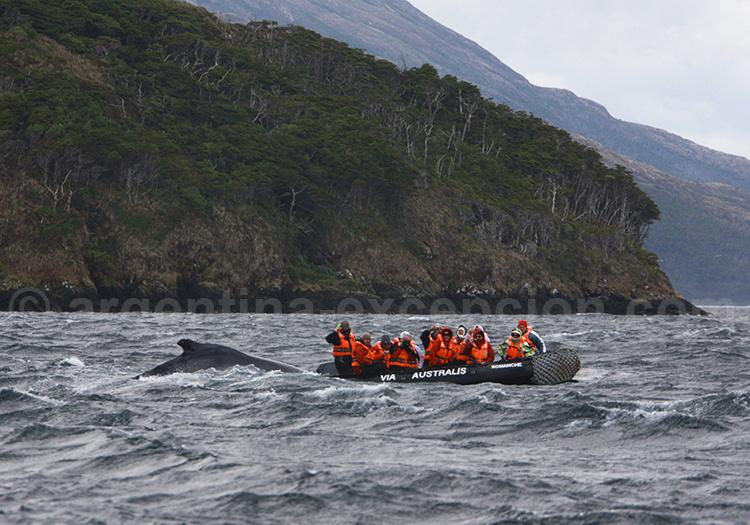 rencontre avec les baleines au cap horn