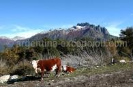 Cerro Los Angeles, Patagonie