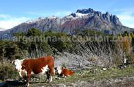 Cerro Los Angeles, Patagonia