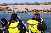 Colonie d'éléphants de mer - Puerto Madryn