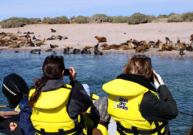Observation d'éléphants de mer, Puerto Madryn