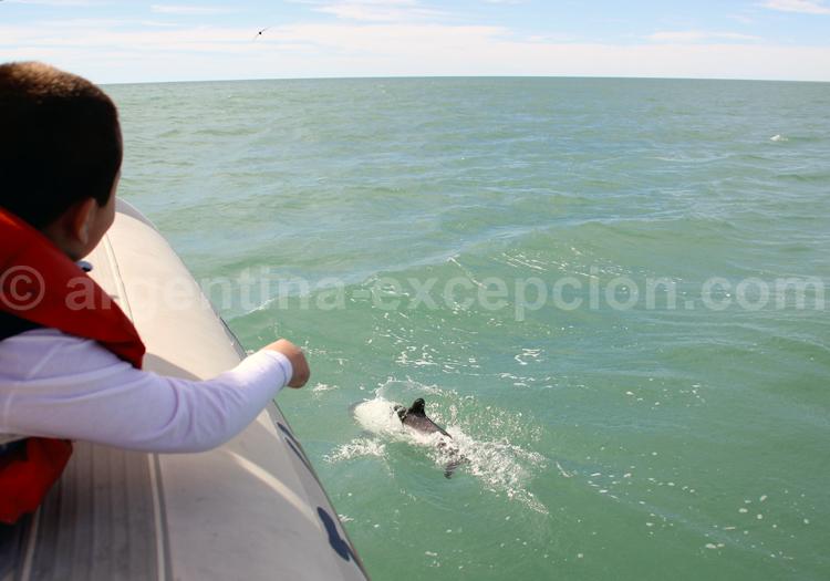 Excursion nautique dauphins de Commerson, Rawson