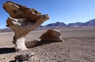 Arbol de Piedra, désert de Siloli