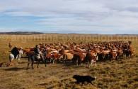 Estancia la Despedida, Tierra del Fuego
