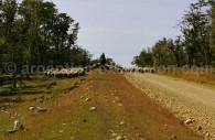 Pampa patagonica