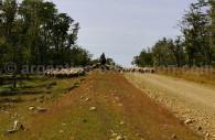 Estancia Rolito, Patagonie