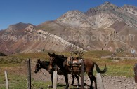 excursion aconcagua