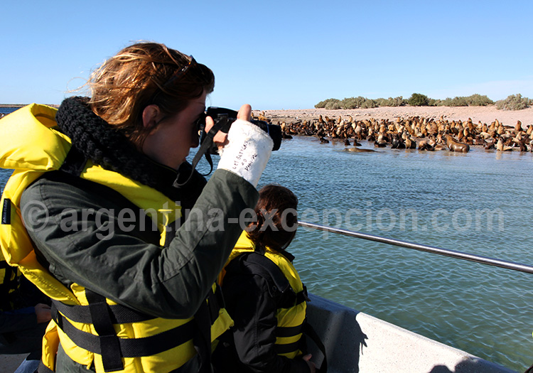 Lions de mer à Bahia Bustamente