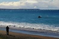 Une baleine sur la plage El Doradillo