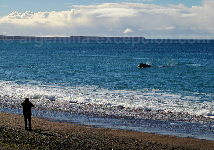 Baleine observée depuis la plage El Doradillo