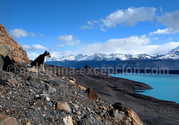 Bras Upsala, Lago Argentino