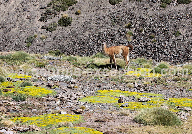 Faune du parc Aconcagua